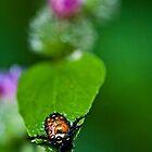 Raindrops on Japanese Beetle by Adam Bykowski