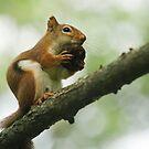 walnut fan by jude walton