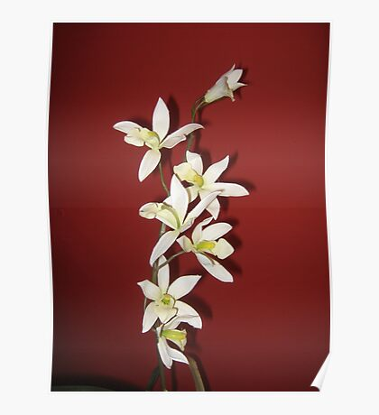 Oriental Orchids Poster