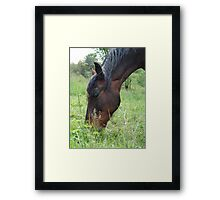 TOBY, THE RACKING HORSE Framed Print