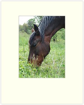 TOBY, THE RACKING HORSE by May Lattanzio