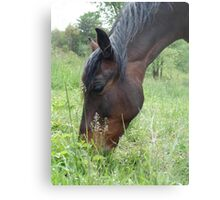 TOBY, THE RACKING HORSE Metal Print