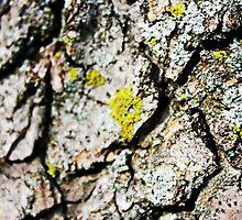 Do Tree's Bark by jsarge