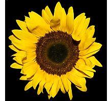 Sunflower on black background Photographic Print