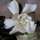 Gardenia Variation by Barbara Wyeth