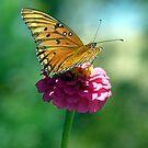 Butterfly on Flower by WTBird