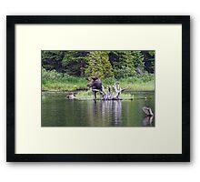 Loose Moose Framed Print