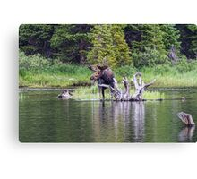 Loose Moose Canvas Print