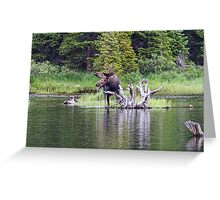 Loose Moose Greeting Card