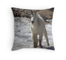 Mountain Goat - Glacier National Park Throw Pillow