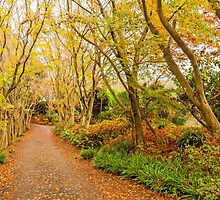 Autumn forest in Japan by kawing921