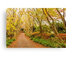 Autumn forest in Japan Canvas Print