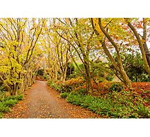 Autumn forest in Japan Photographic Print