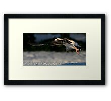 In The Cold Light Of Day Framed Print