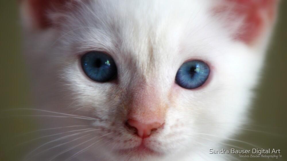 Baby Blue Eyes by Sandra Bauser Digital Art