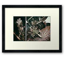 Posie.  Framed Print