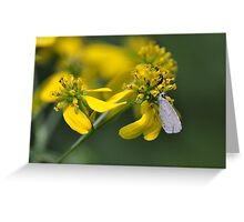 Little white butterfly on a tall yellow wildflower Greeting Card