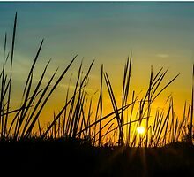 Swamp Grass by AhArtography