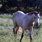 Horse in the field  by SUZYQ56