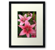 Pink Beauties-early morning flowers Framed Print