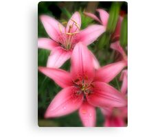 Pink Beauties-early morning flowers Canvas Print
