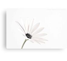 Daisy White Delight Canvas Print