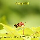 Bee/Wasp by vasu