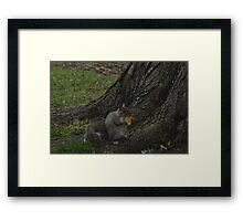 Sunday Squirrel Brunch Framed Print