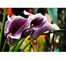 Farmers Market Lilies Photographic Print