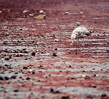 Seagull on Red Beach by Jim Haley