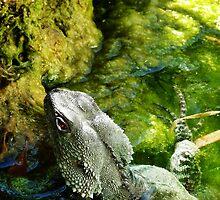 Water Dragon by Ravyk