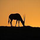 Gazelle in the Sunset by Vanessa Zakas