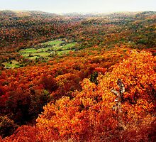 Ozark National Forest in Autumn by Lisa G. Putman