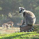 The Thoughtful Lemur by Vanessa Zakas