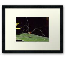 mr. long legs Framed Print