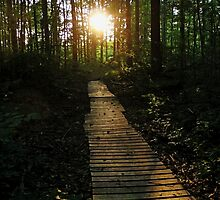 Boardwalk To The Sun by Debbie Oppermann