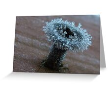 Frosty Screw - New Zealand - Southland Greeting Card
