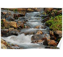 Little Stream at Lake Tipsoo Poster