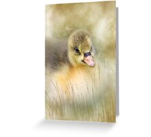 Golden gosling Greeting Card