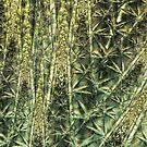 Bamboo depths by Fiery-Fire