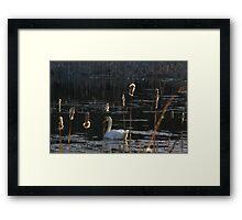 Swanny River Framed Print