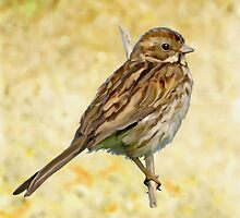 Reed Bunting by Bamalam Art and Photography