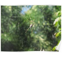 The Golden Orb Spider Poster