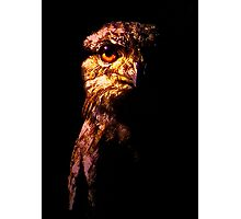 Tawny Frogmouth - The Nightjar (2009) Photographic Print