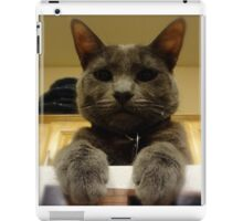 catness iPad Case/Skin