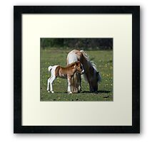 Mare and pony Framed Print