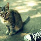 Cat and shoe by Iuliia Dumnova
