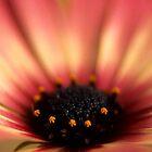 Flower Close up by Edeneye