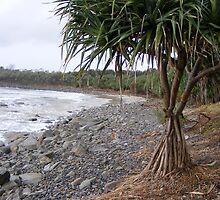 Pandanas Tree - Convent Beach - Yamba by Sandy MacLean