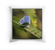Holly Blue ( Ceelestrina argolus) (II) Throw Pillow